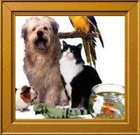 MIS SERES NOBLES E INCONDICIONALES: Derechos De Los Animales